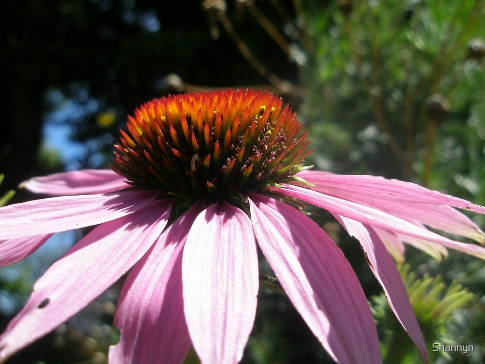 Pink Daisy by Shannyn