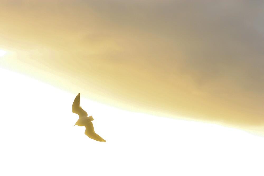 Golden Flight by Matt0315