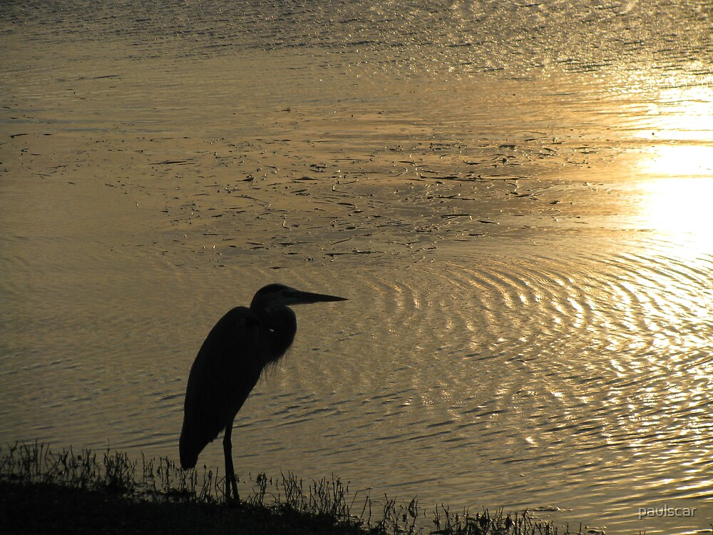 Heron Silhouette by paulscar