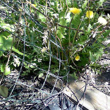 Flower Net by benwil1785