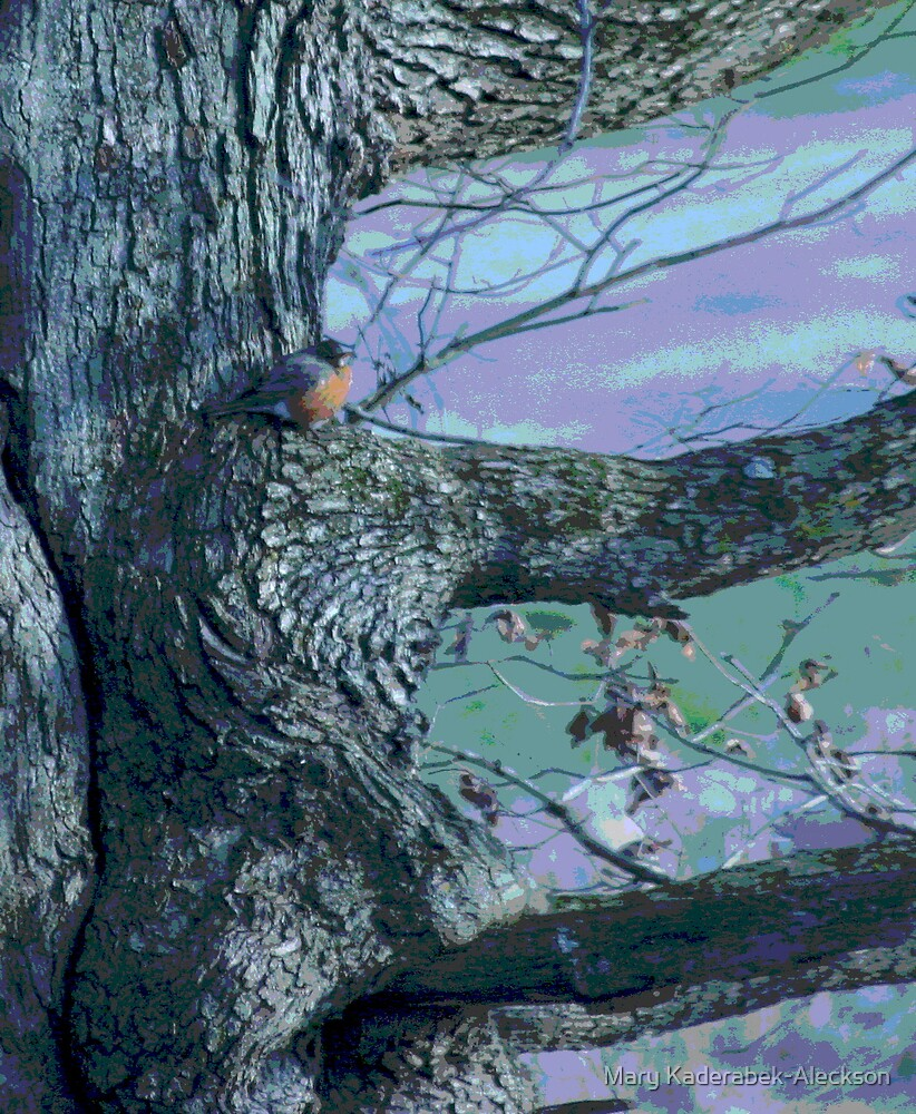 Robin in Waiting by Mary Kaderabek-Aleckson