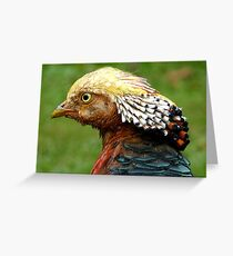 Bob Marley Look Alike! - Golden Pheasant - NZ ** Greeting Card