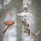 Blizzard Soiree - Birds Only by autumnwind