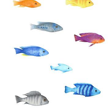 fish 09 cichlids malawi lake by dai-dai
