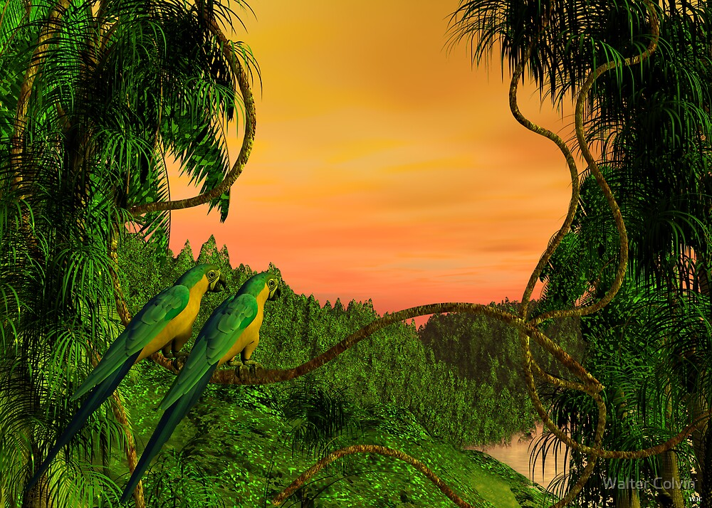 Amazon Sunset by Walter Colvin