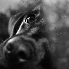 dog by Ingrid Beddoes