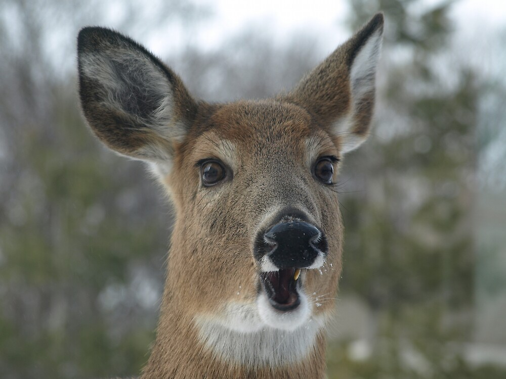 Faces of Deer Series #2 by JThill