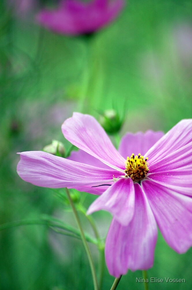 Flower seriers #1 by Nina Elise Vossen