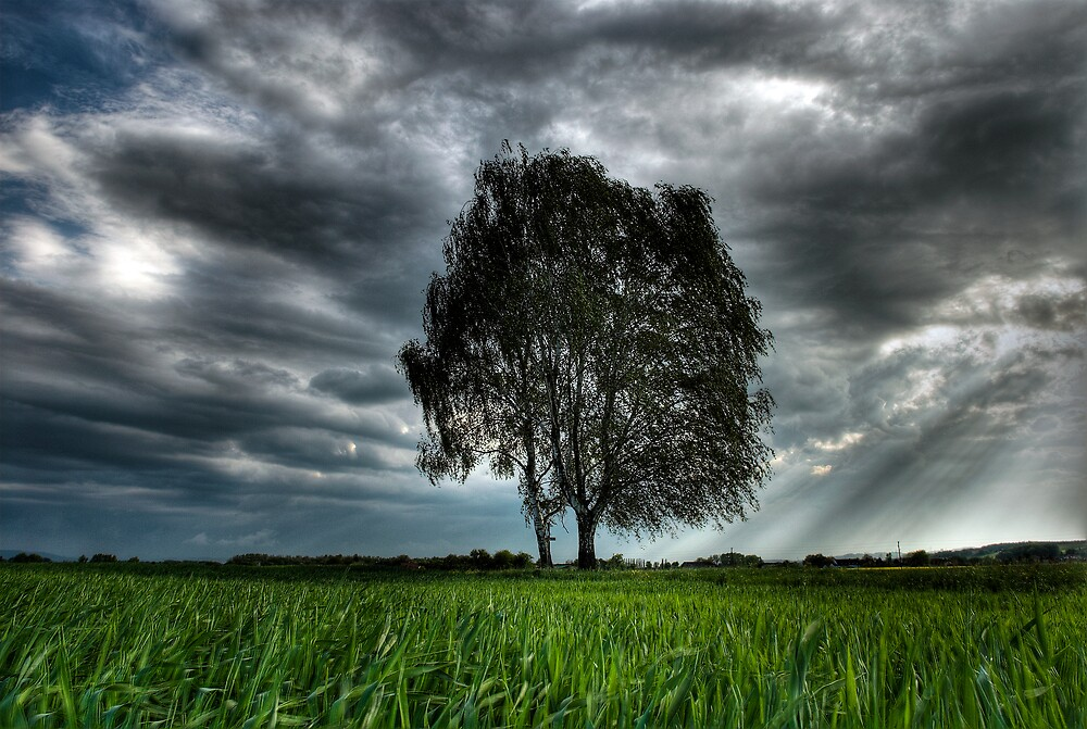 Tree by niklens