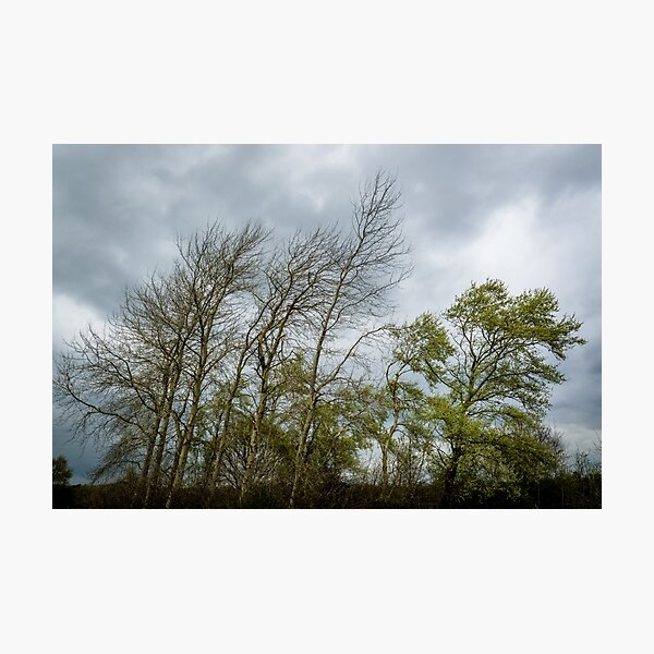 Leaning Trees Photographic Print