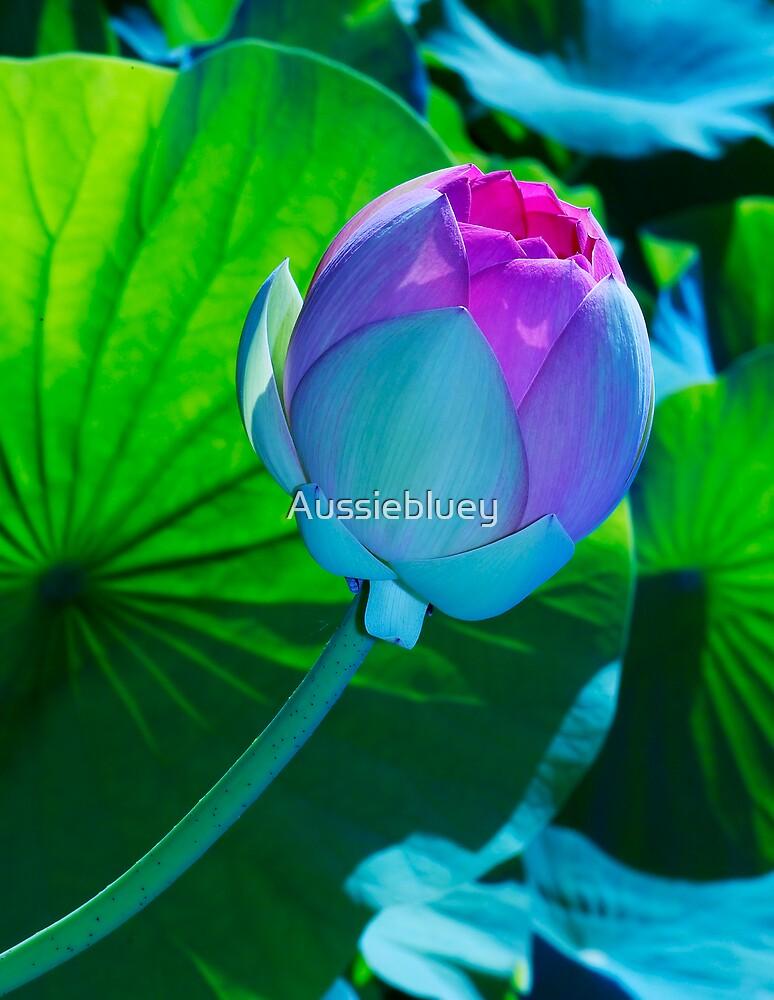 Lotus Blossom. by Aussiebluey
