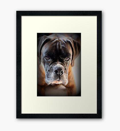 Gehen Sie voran .... Machen Sie meinen Tag ~ Boxer Dogs Series ~ Gerahmter Kunstdruck