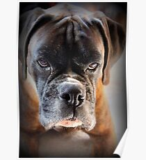 Go Ahead .... Make My Day  ~ Boxer Dogs Series ~ Poster