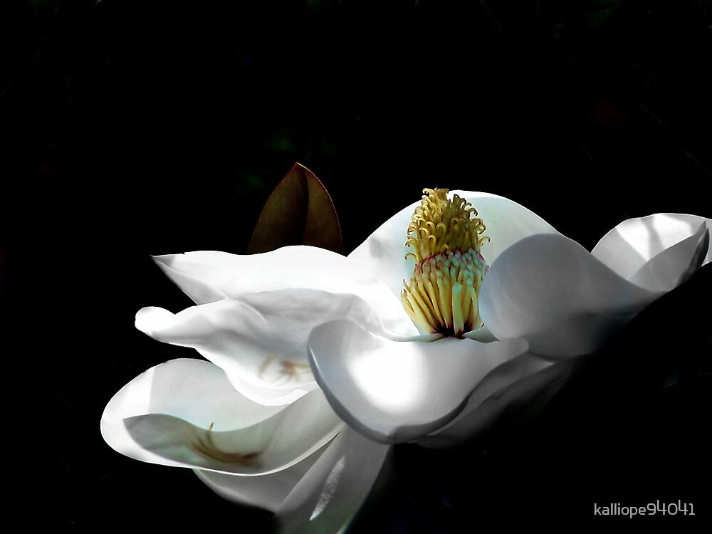 Magnolia Blossom 6 by kalliope94041