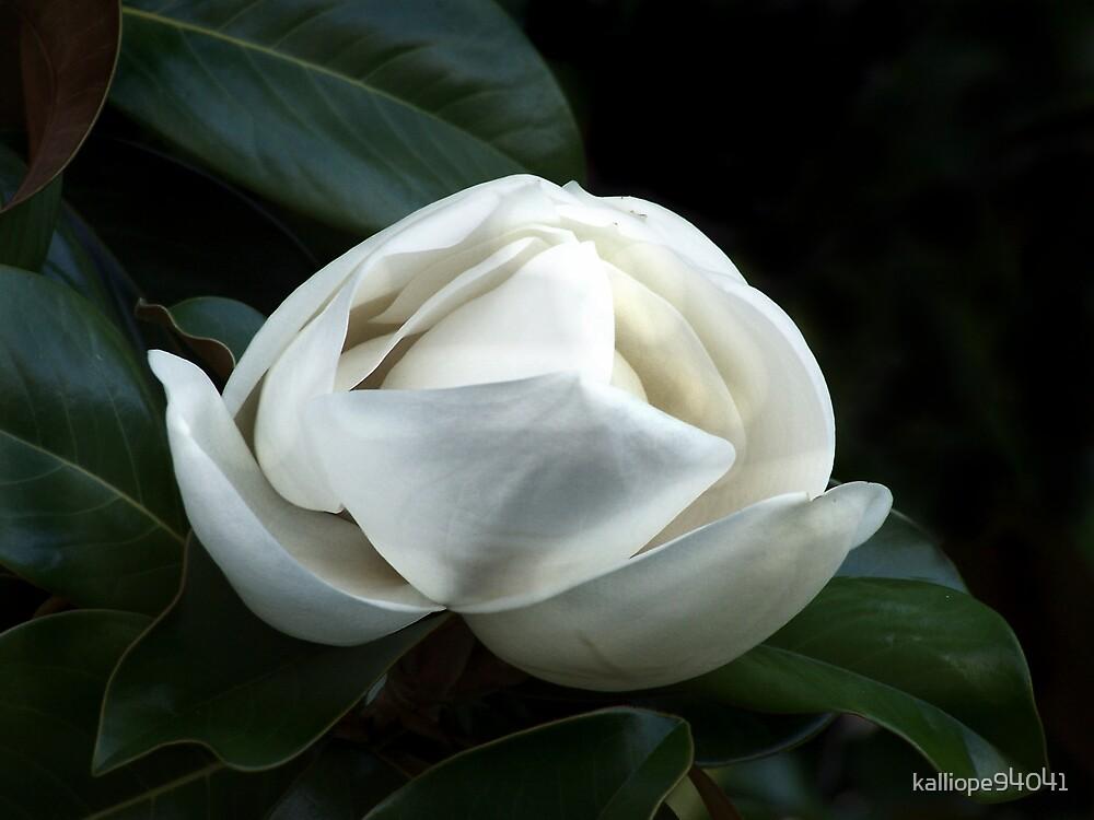 Magnolia Blossom 4 by kalliope94041