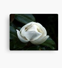 Magnolia Blossom 4 Canvas Print