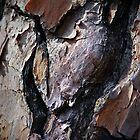Heart Bark by Cynthia48