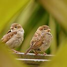 That's A Very Strange Eye Looking At Us.. - Sparrow Fledglings - NZ by AndreaEL