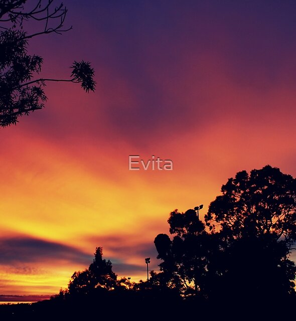 Colours Of  An Autumn Morning by Evita