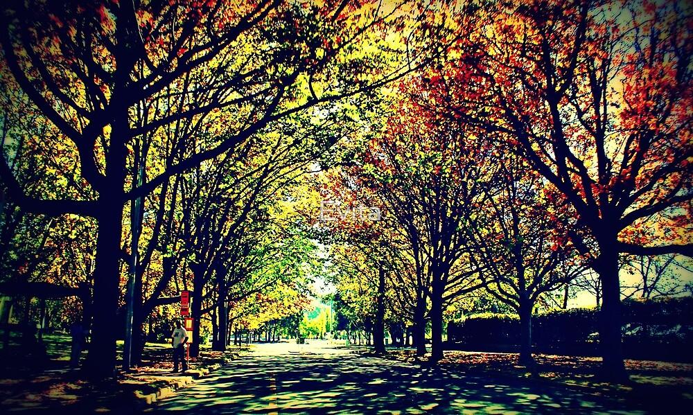 Autumn In Canberra by Evita