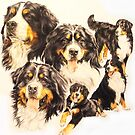 Bernese Mountain Dog by BarbBarcikKeith