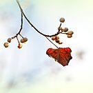 Herbst Flüstern von Evita