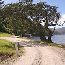 Rough and rugged.......Great Barrier Island......! by Roy  Massicks