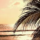 Sunset Palm by Jeri Garner