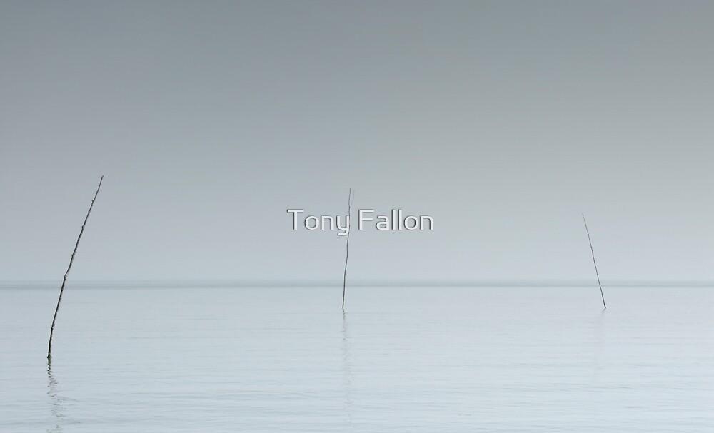 Sticks by Tony Fallon