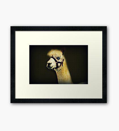 Eine andere Art von Alpaka Gerahmter Kunstdruck