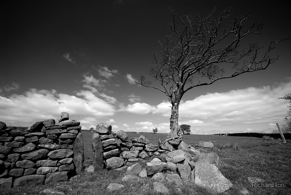 Yorkshire Tree without the colour by Richard Ion