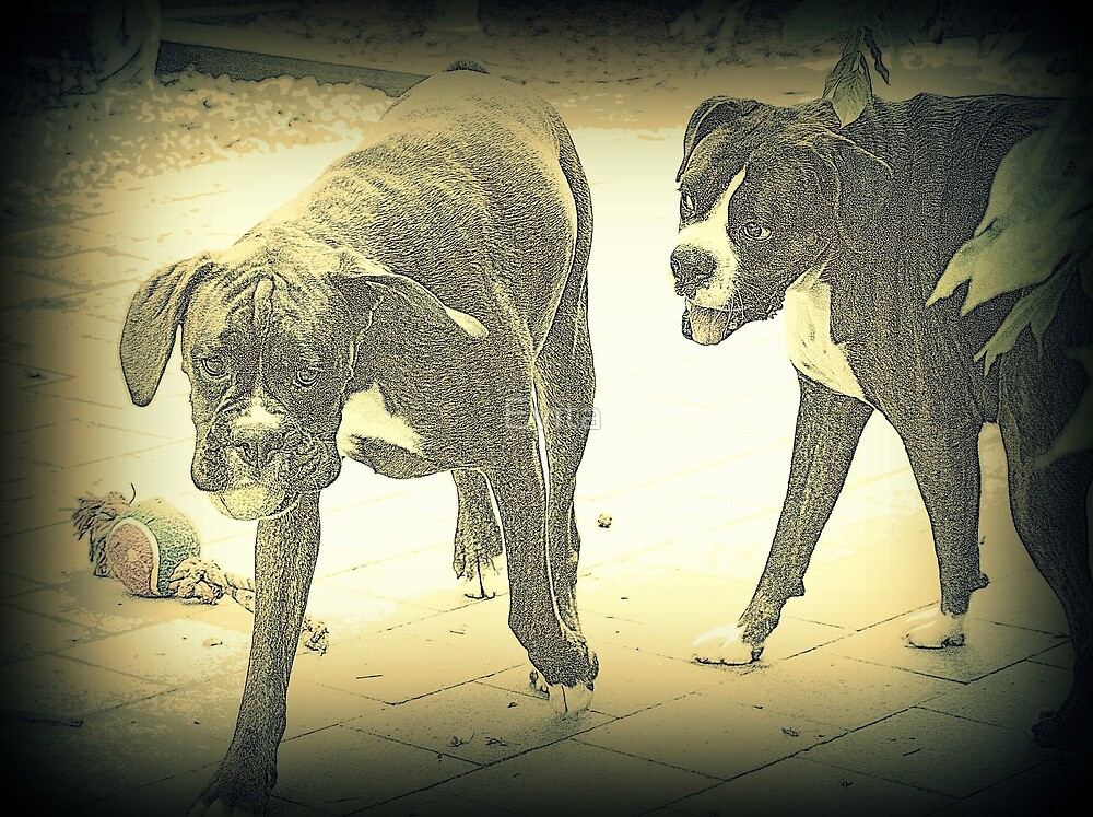 Boxers At Play by Evita