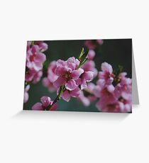 Peach Blossoms #1 Greeting Card