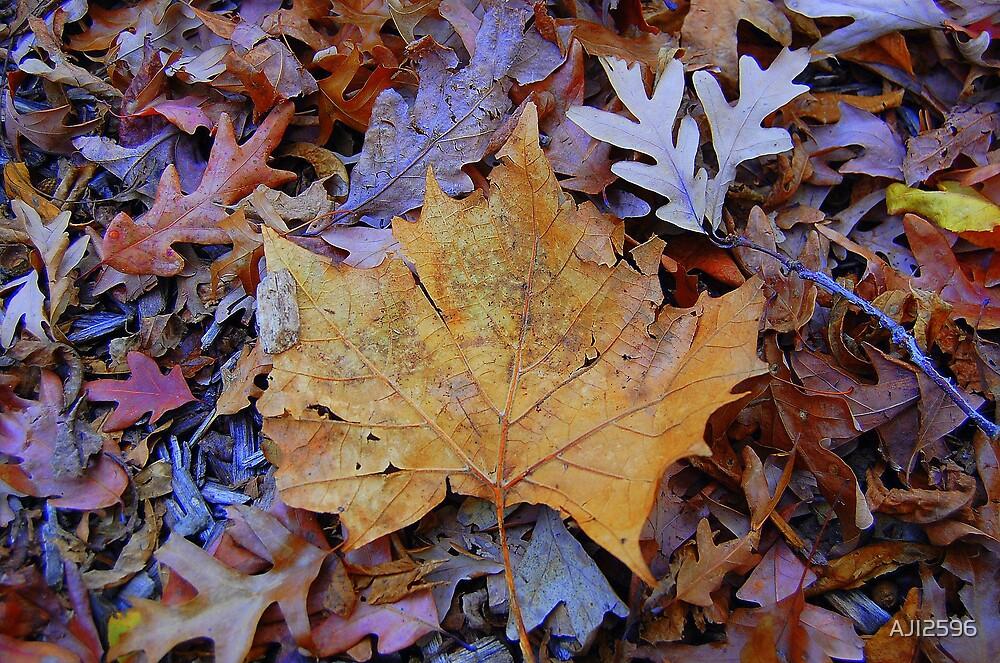Big Leaf... by AJI2596