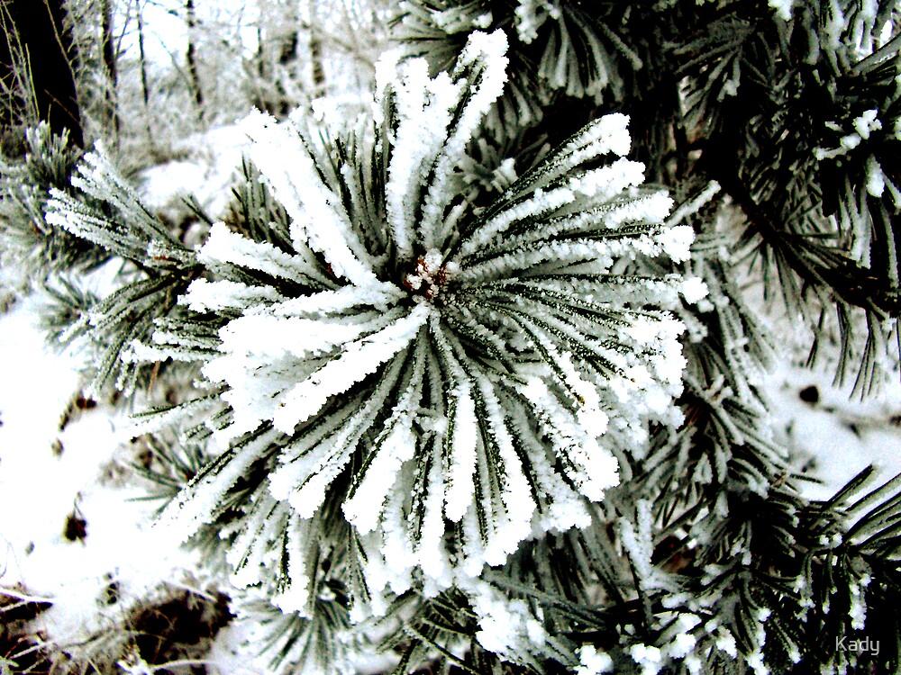 Snowy pine by Kady