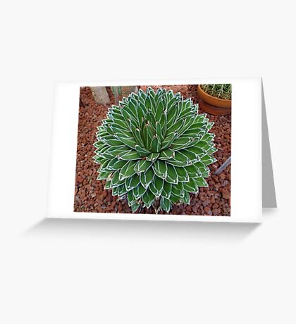 Queen Victoria Agave Greeting Card