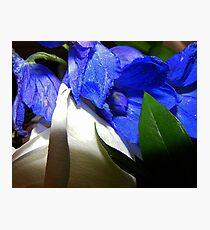 Silky Photographic Print