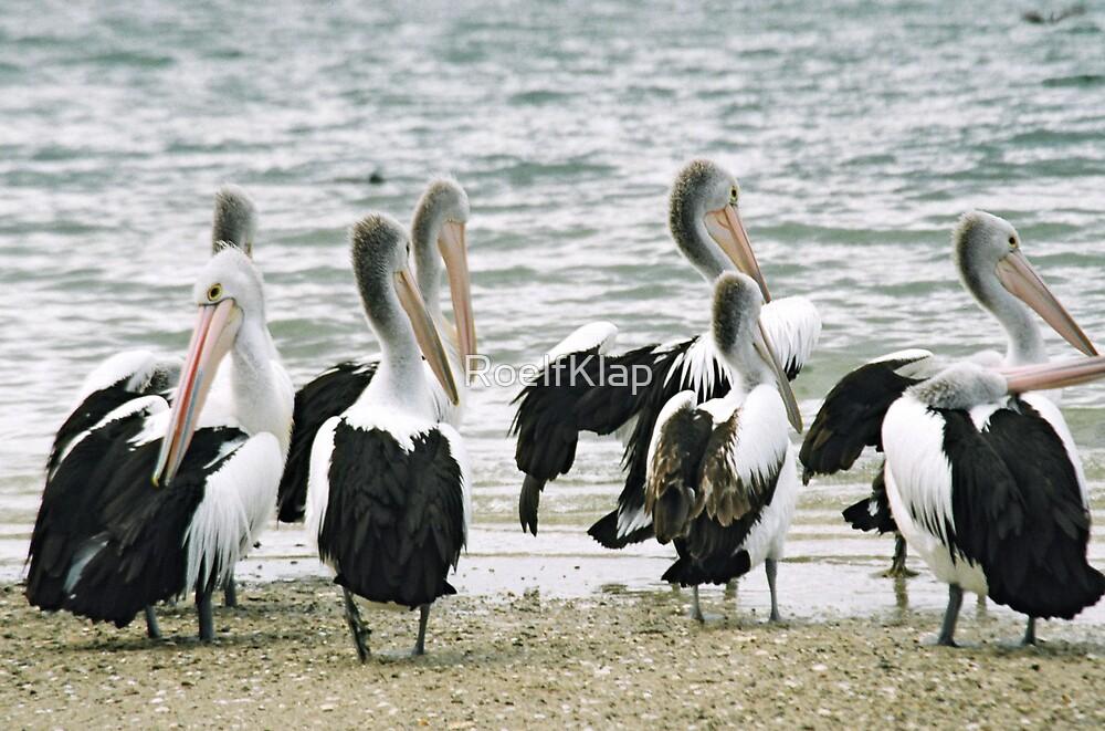 Pelicans by RoelfKlap