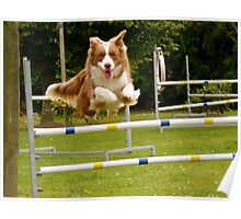 I Believe I Can Fly... I Believe... - Border Collie - NZ Poster