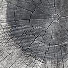 26.4.2017: Old Stump by Petri Volanen
