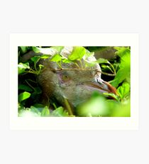 Got My Yellow Eye On You! - Yellow-eyed  Penguin - Rarest Penguin in the world - NZ Art Print
