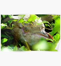 Got My Yellow Eye On You! - Yellow-eyed  Penguin - Rarest Penguin in the world - NZ Poster