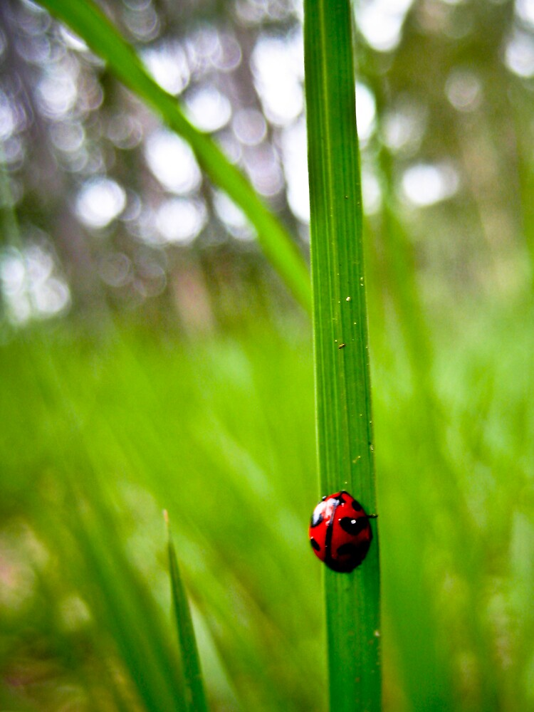 Ladybug by Michelle Williams