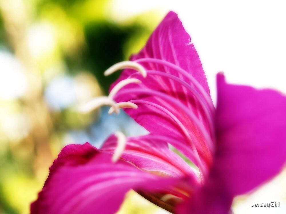 flower bokeh. by JerseyGirl