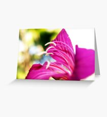 flower bokeh. Greeting Card