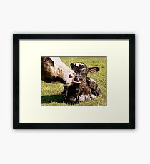 Welcome To The World My Son!! New Born Calf - NZ Framed Print