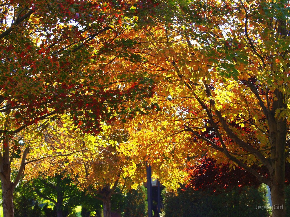 New Jersey trees in October by JerseyGirl