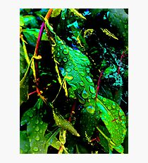 Leaves and rain drops Photographic Print