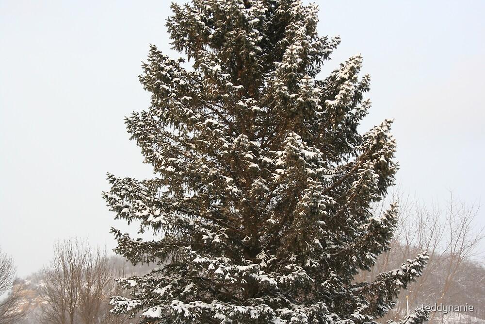 lone pine by teddynanie