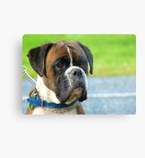Beautiful Jowls! - Boxer Dog - NZ Metal Print